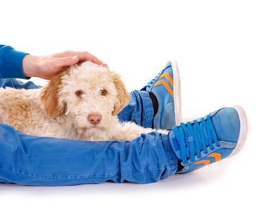 飼い主さんの足の間で休む犬