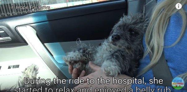 マッサージを受ける犬