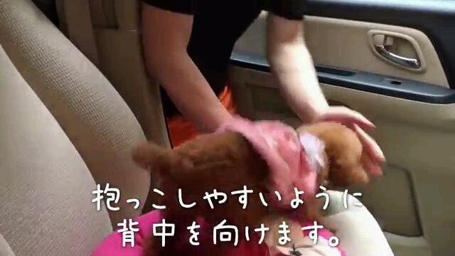 抱っこ〜字幕