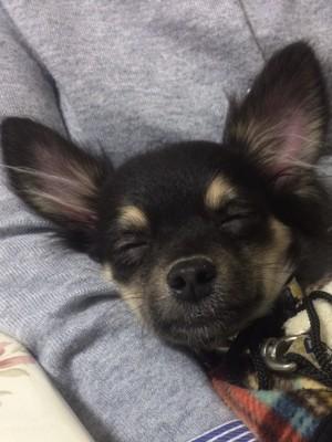 笑顔で寝ている写真