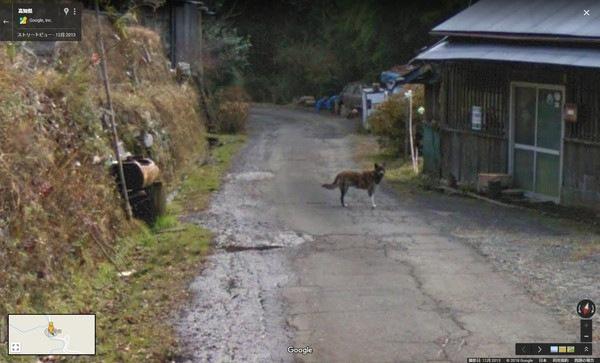 ストリートビューカーを見送る犬