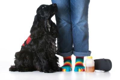 飼い主に寄り添うサービスドッグのベストを着た犬