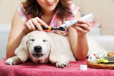 歯ブラシに歯磨き粉を付ける飼い主と犬