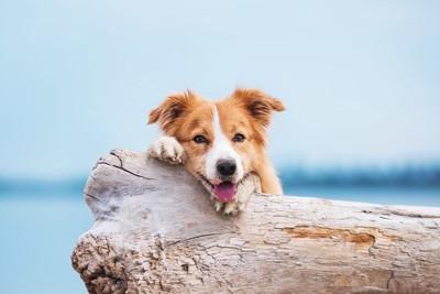 海を背景に流木の上で休んでいる犬