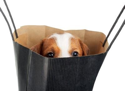 袋から顔を出している子犬