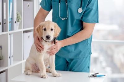 診察台の上の犬