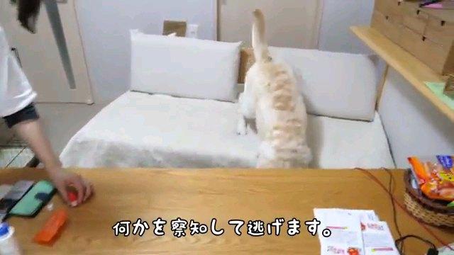 何かを~字幕