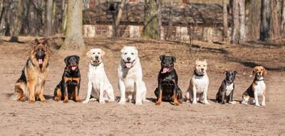 一列に並んでお座りする犬達
