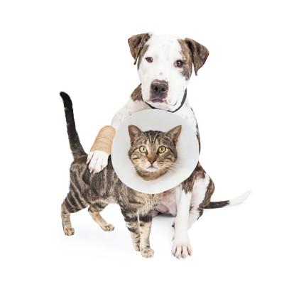 包帯を巻いた犬とカラーを着けた猫