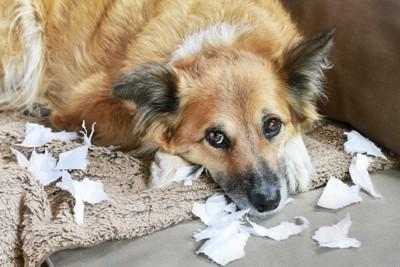 紙を撒き散らしていたずらをした犬