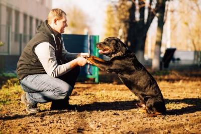 犬の両手を掴む飼い主