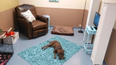 部屋で寝ている茶色い犬