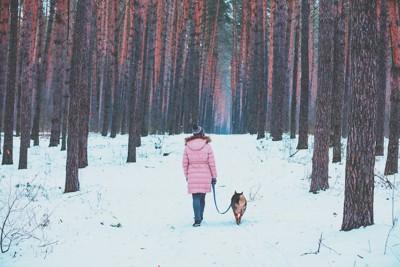 雪の中を歩く女性と犬の後ろ姿