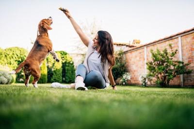 お庭で遊ぶ女性と犬
