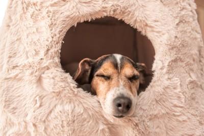 ドーム型のベッドで眠る犬