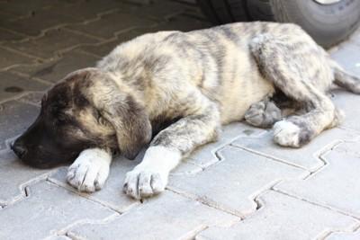 地面で休む子犬