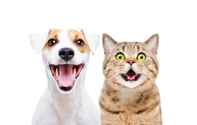 驚いたような表情の犬と猫