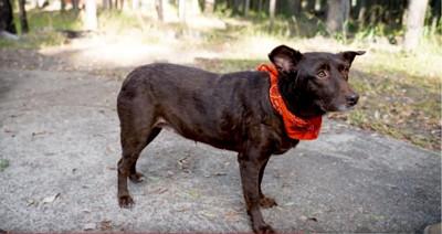 茶色い犬の全身