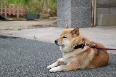 赤いリードに繋がれた犬