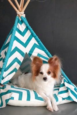 犬用テントに入るパピヨン