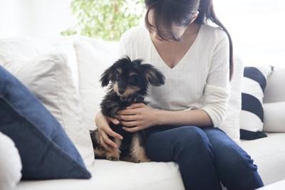 ソファーでおすわりする犬とホールドする女性