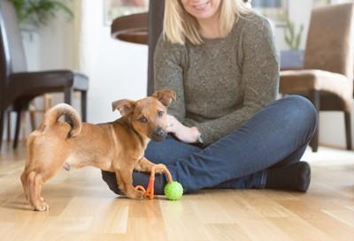 飼い主とおもちゃで遊ぶ子犬