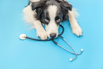 聴診器をくわえた犬