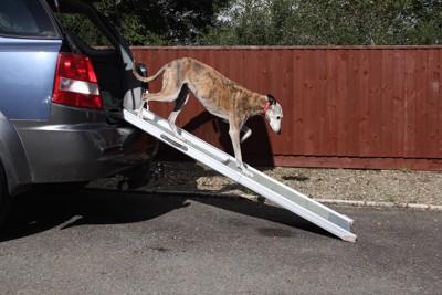 スロープを使って車を降りる犬