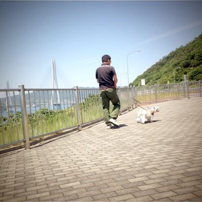犬の散歩中