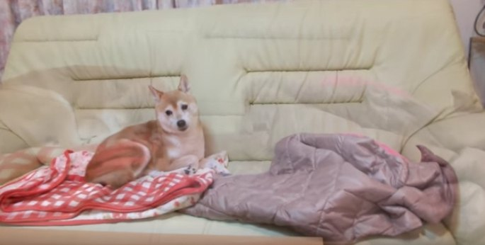 ソファに座るいちごちゃん