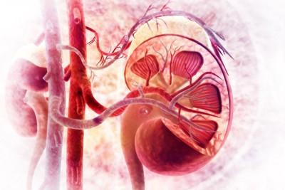 腎臓のスキャン