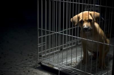 ゲージに入った悲しそうな子犬