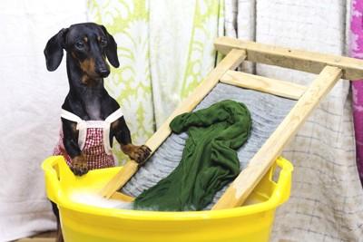 洗濯板で洗濯する犬