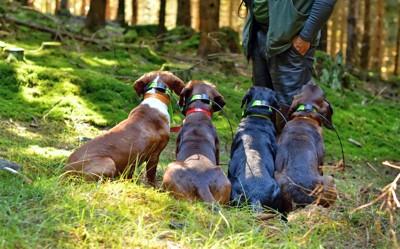 飼い主の前に並んで座る4匹の犬