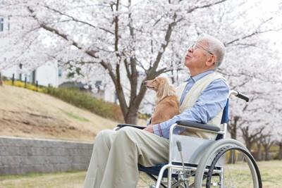 桜を見上げる男性とダックスフンド