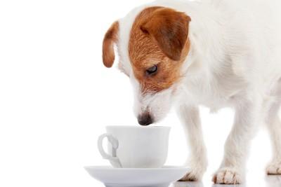カップの中を眺める犬