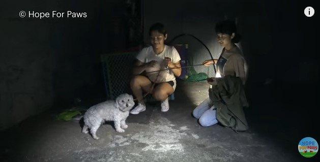 犬と少女たち