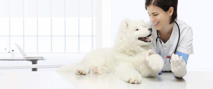 見つめ合う女性獣医師と犬