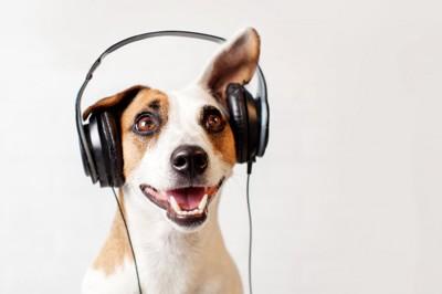 ヘッドフォンで音楽を聴く犬