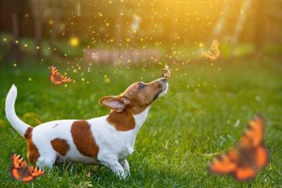 たくさんの蝶と草原にいる犬