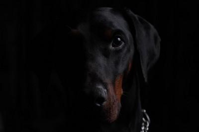 暗い背景でこちらを見つめている犬