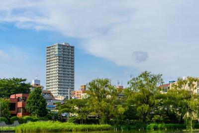 夏の石神井公園