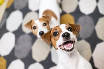 嬉しそうにこちらを見上げる二頭の犬