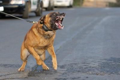 怒ってる犬