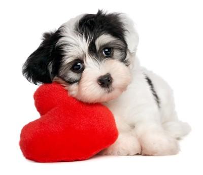 子犬と赤いハートのまくら