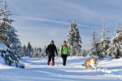 雪の中を歩く犬と女性と男性