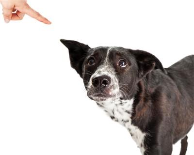 指をさされている白黒の犬