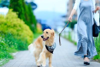 飼い主と散歩を楽しむゴールデンレトリバー