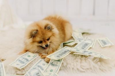 お金を見つめる犬