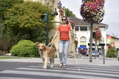 横断歩道を渡る女性と犬